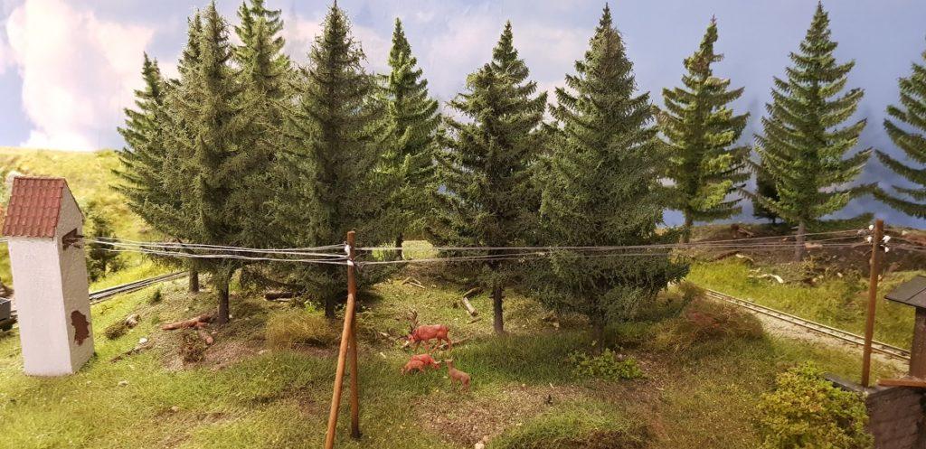 Wald - Fichtenbau im Vergleich